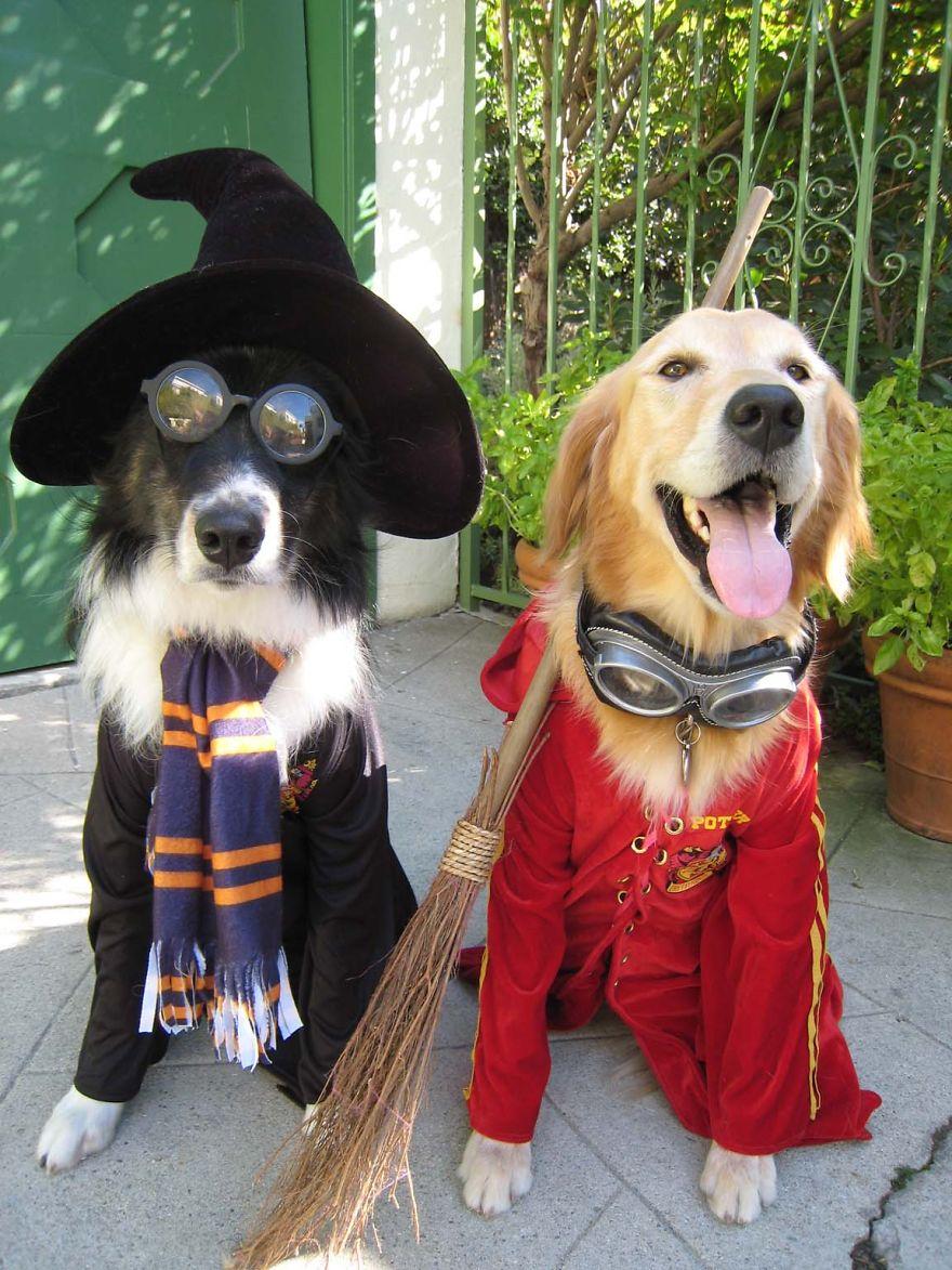 disfraz-mascotas-halloween-23__880