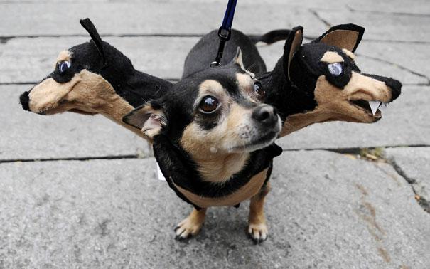 disfraz-mascotas-halloween-271__605