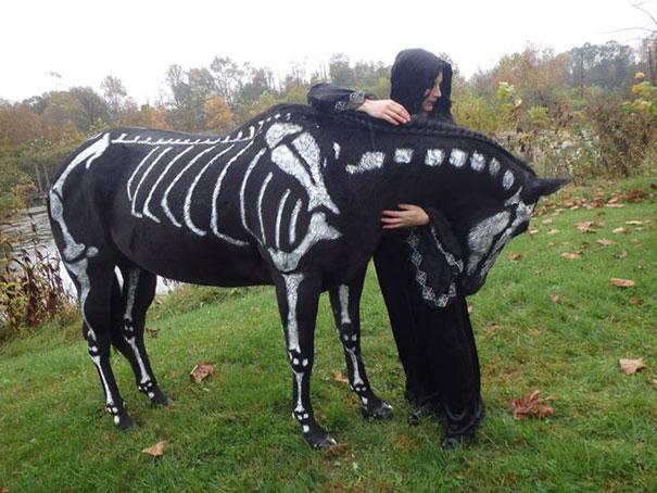 disfraz-mascotas-halloween-281__605