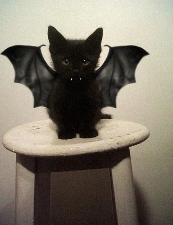 disfraz-mascotas-halloween-291__605
