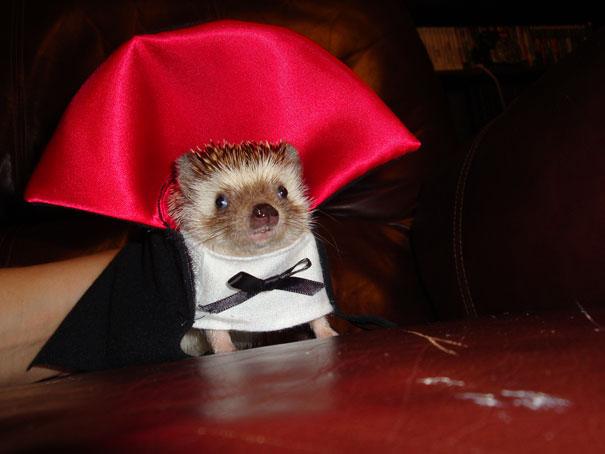 disfraz-mascotas-halloween-301__605