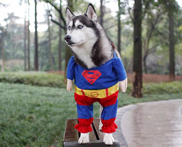 disfraz-mascotas-halloween-312__605