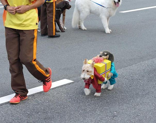 disfraz-mascotas-halloween-341__605