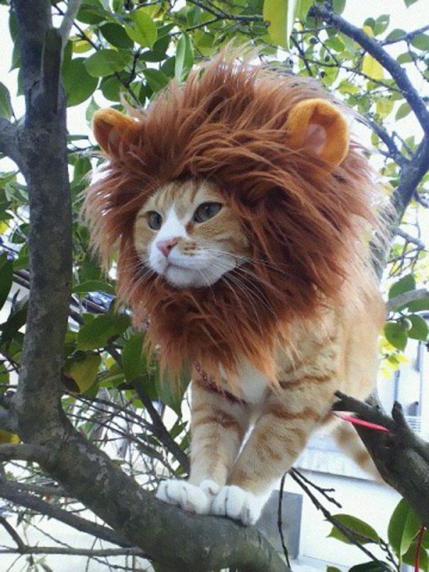 disfraz-mascotas-halloween-351__605