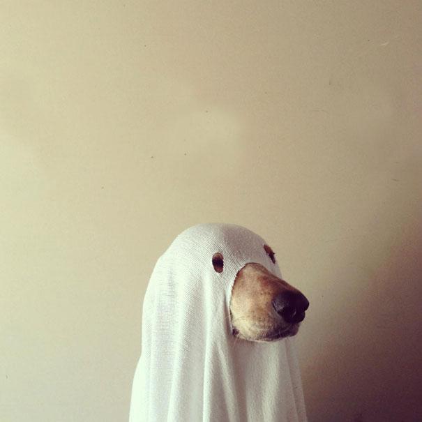 disfraz-mascotas-halloween-371__605