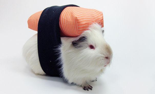 disfraz-mascotas-halloween-381__605