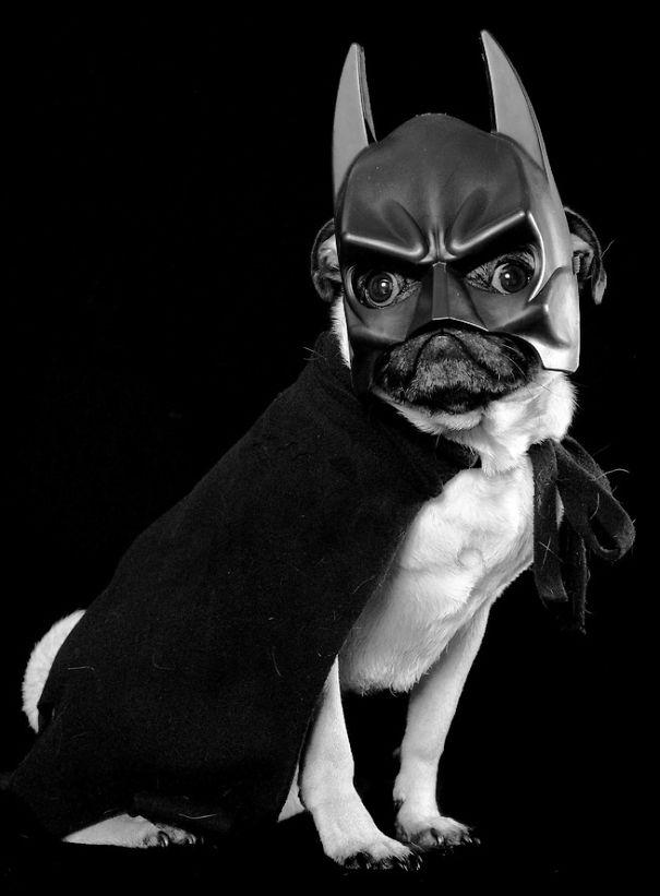 disfraz-mascotas-halloween-5__605