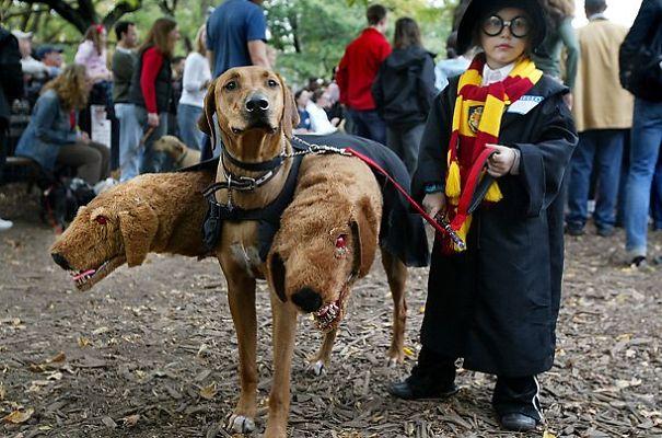 disfraz-mascotas-halloween-69__605