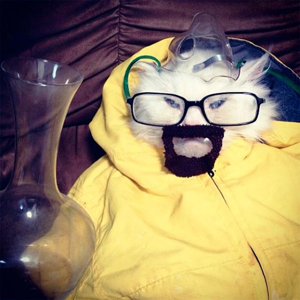 disfraz-mascotas-halloween-72__605
