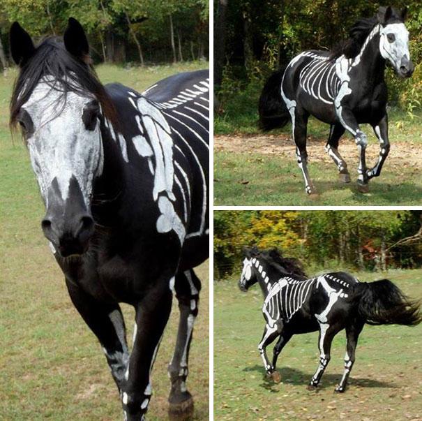 disfraz-mascotas-halloween-78
