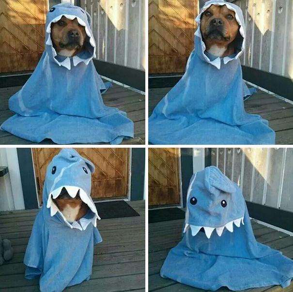 disfraz-mascotas-halloween-82__605