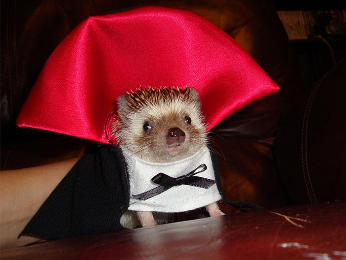 Disfraces De Halloween Para Mascotas: Tiernos A La Par Que Terroríficos