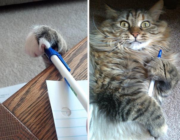 gatos-ladrones-fotos-animales-1__605