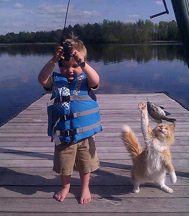 gatos-ladrones-fotos-animales-28__605
