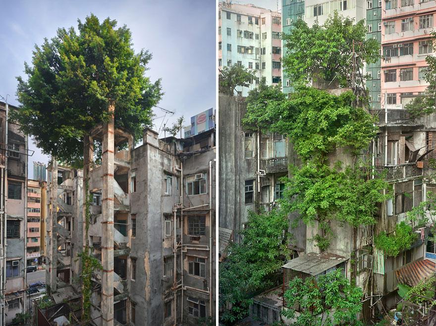naturaleza-recupera-lugares-abandonados-27