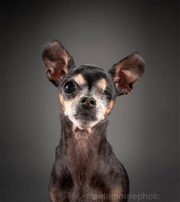 viejo-fiel-retratos-perros-pete-thorne-1