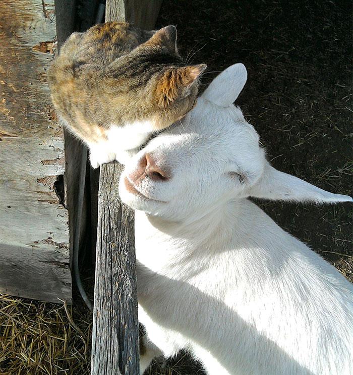 20 Amistades Animales Poco Usuales Pero Absolutamente Adorables