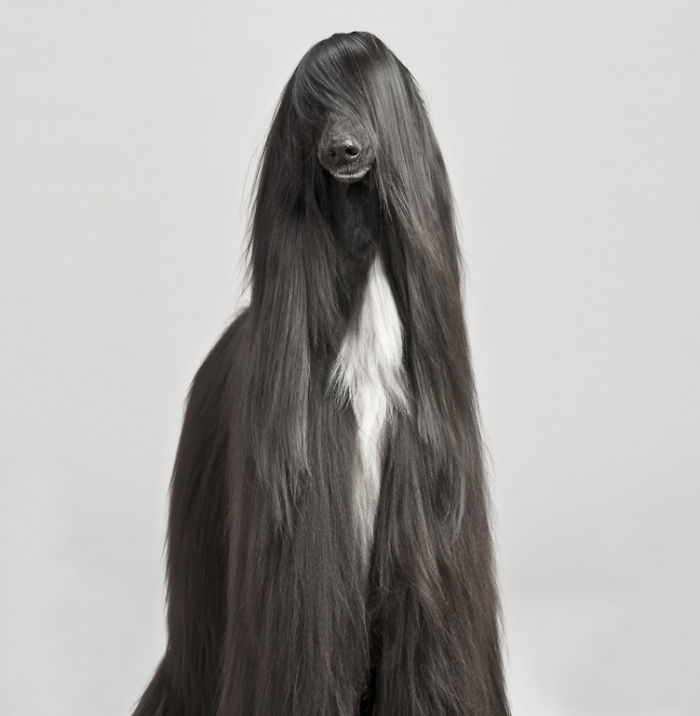 animales-melenudos-3__700