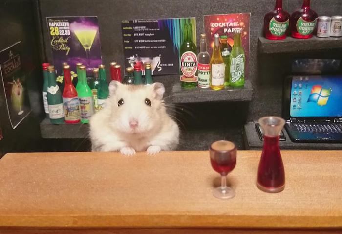 Hamsters Camareros Que Te Atenderán Gustosos En Sus Pequeños Bares