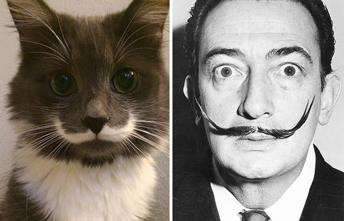 gatos-curiosos-parecidos- (12)
