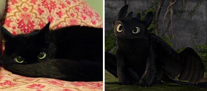 gatos-curiosos-parecidos- (4)