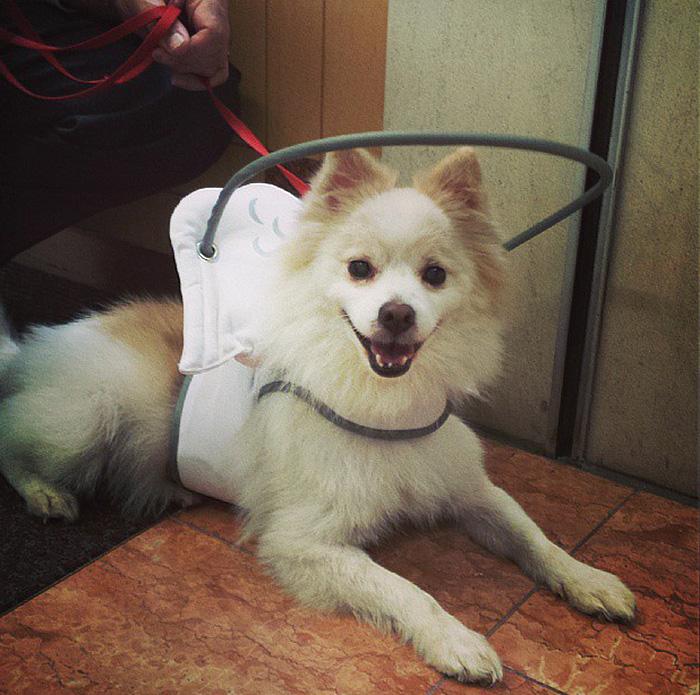 halo-seguridad-perros-ciegos- (1)