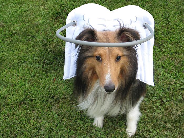 halo-seguridad-perros-ciegos- (11)