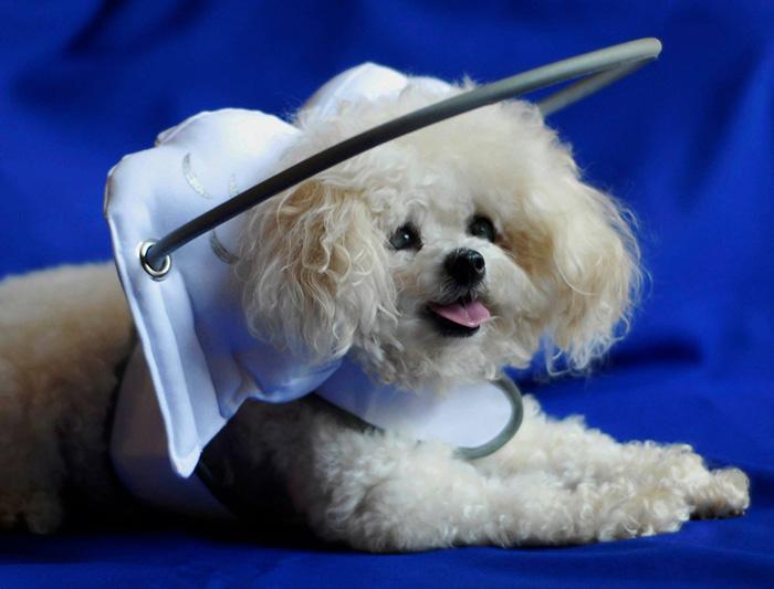 halo-seguridad-perros-ciegos- (2)