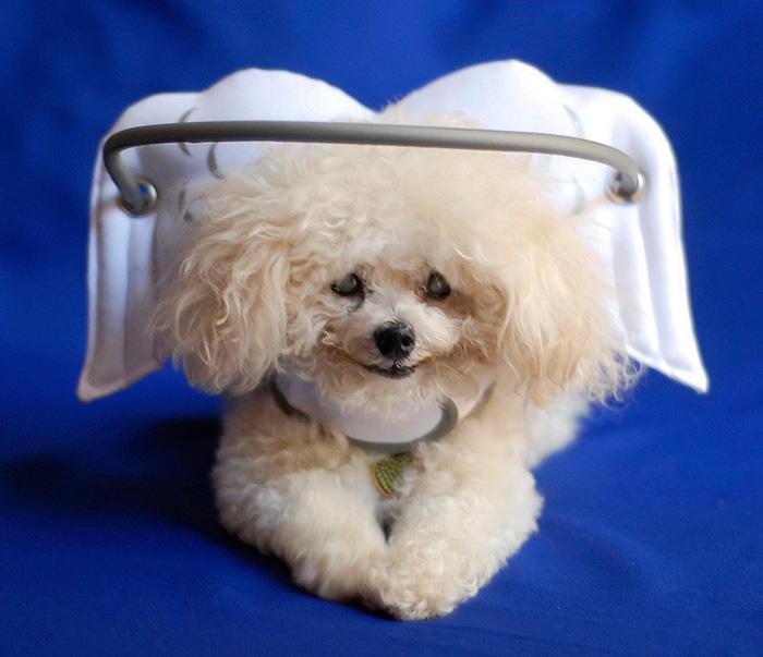 halo-seguridad-perros-ciegos- (3)