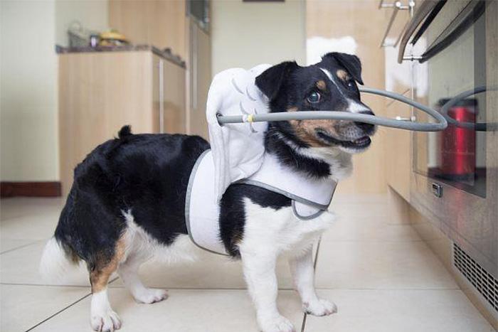 halo-seguridad-perros-ciegos- (6)