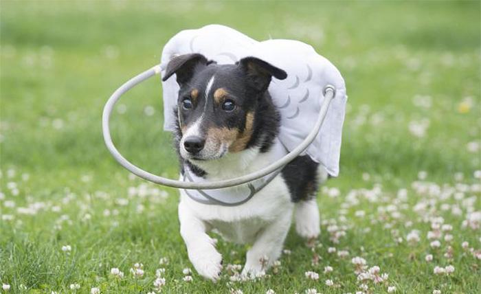 halo-seguridad-perros-ciegos- (7)