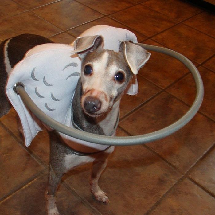 halo-seguridad-perros-ciegos- (8)