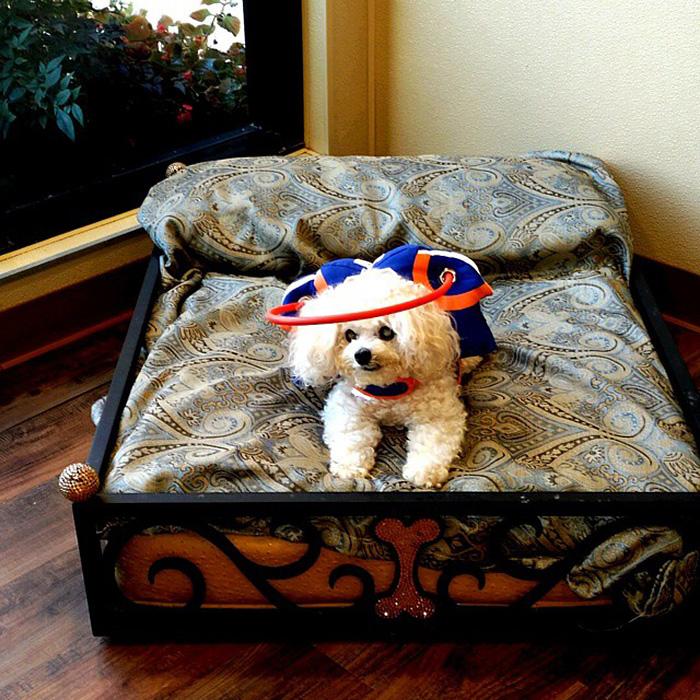 halo-seguridad-perros-ciegos- (9)