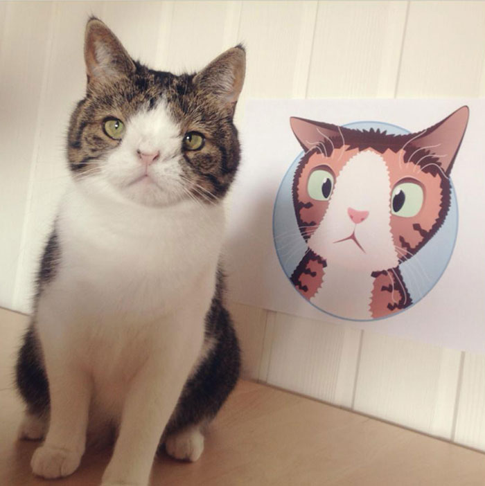 monty-gato-sin-hueso-nasal-14
