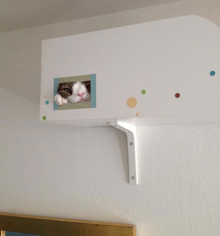 monty-gato-sin-hueso-nasal-17