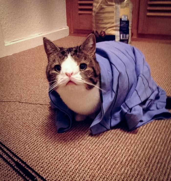 Monty, El Gato De Cara Extraña