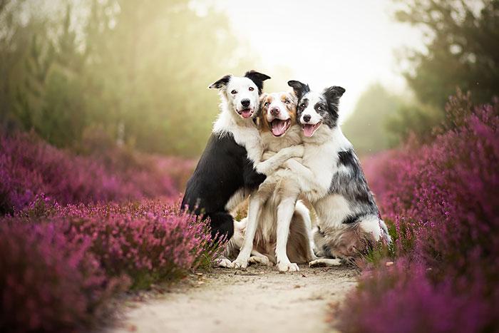 Emotivos Retratos De Perros Hechos Por La Fotógrafa Polaca Alicja Zmyslowska