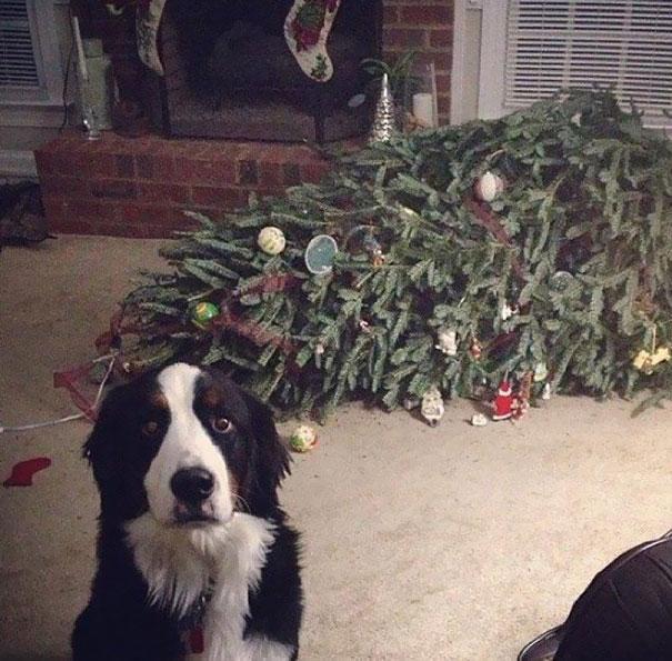 animales-destruyendo-navidad- (2)
