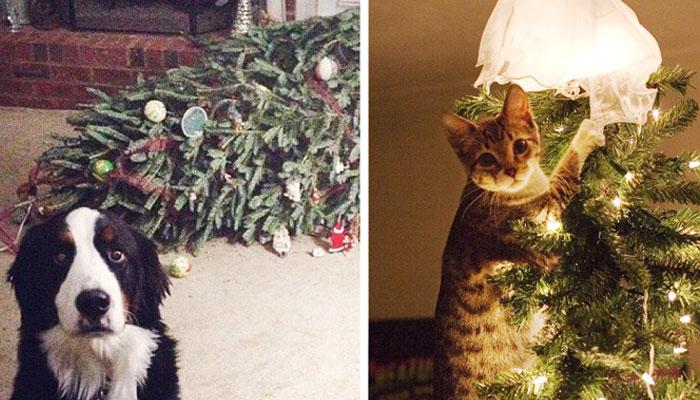 14 perros y gatos destruyendo la navidad
