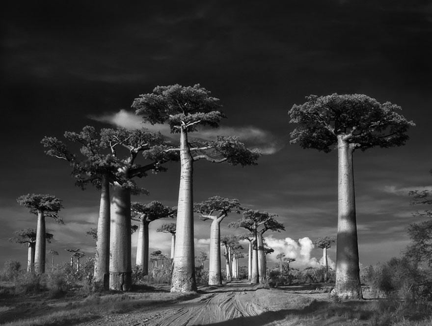 arboles-antiguos-beth-moon (1)