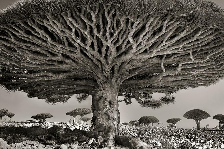 arboles-antiguos-beth-moon (8)