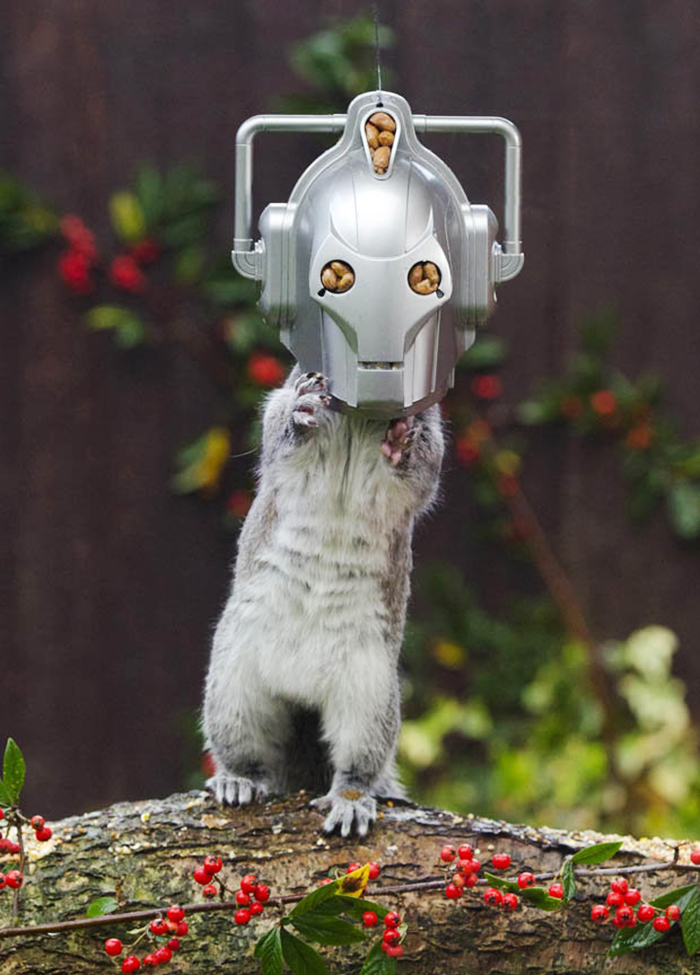 Cyberardilla: Este comedero transforma a las ardillas en los mortales enemigos del Doctor Who
