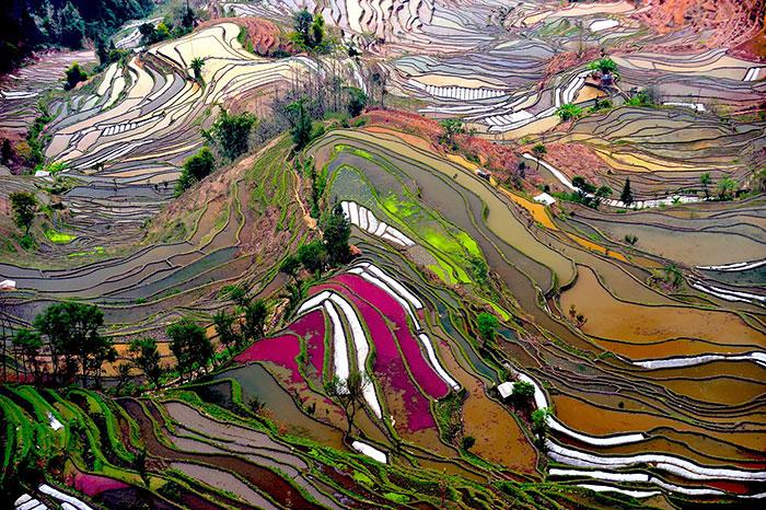 20 Increíbles arrozales que embellecen el paisaje