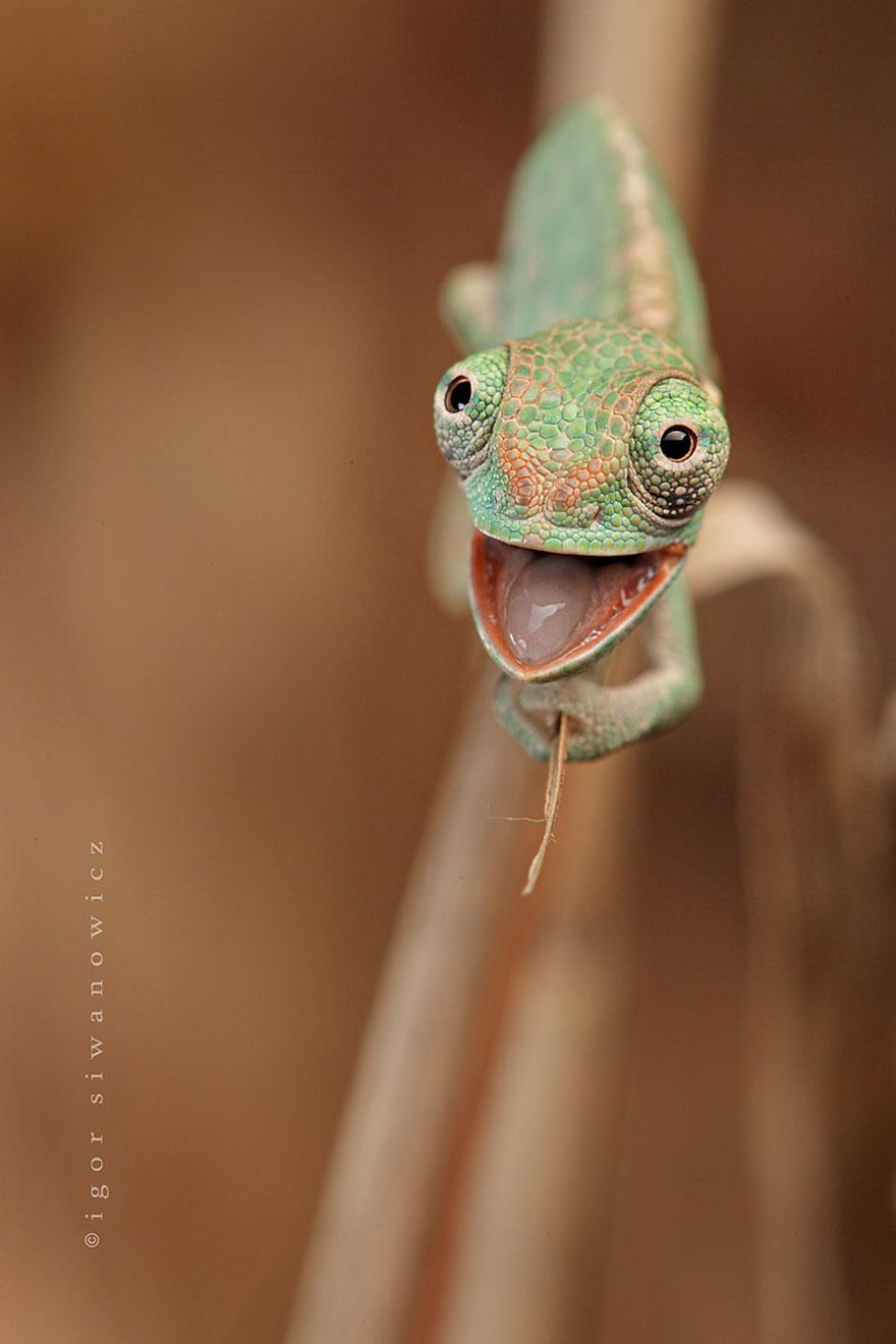 reptiles-adorables (16)