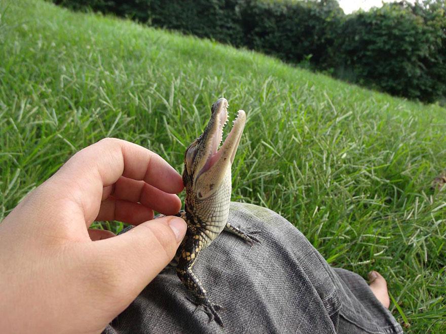reptiles-adorables (20)