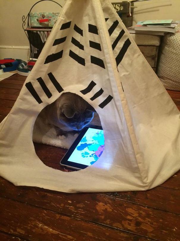 gatos-mimados (3)