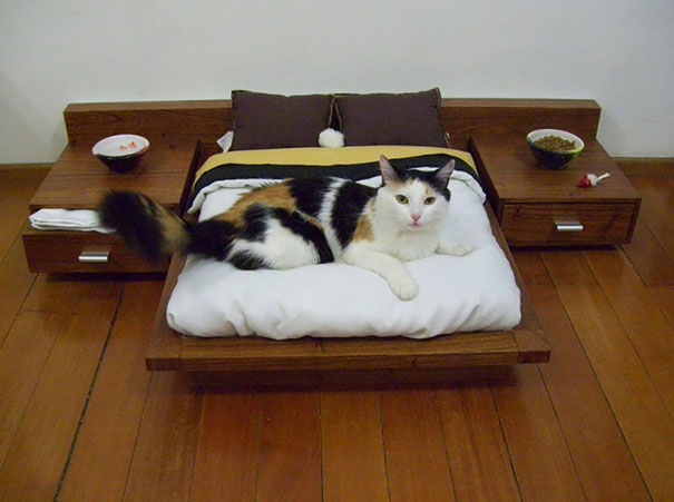 gatos-mimados (4)