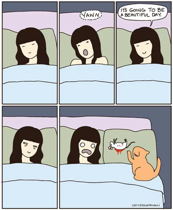logica-gatos (29)