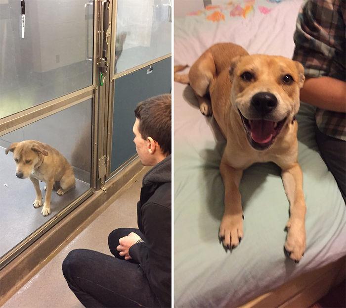 16 Fotos de mascotas un día antes y después de ser adoptadas