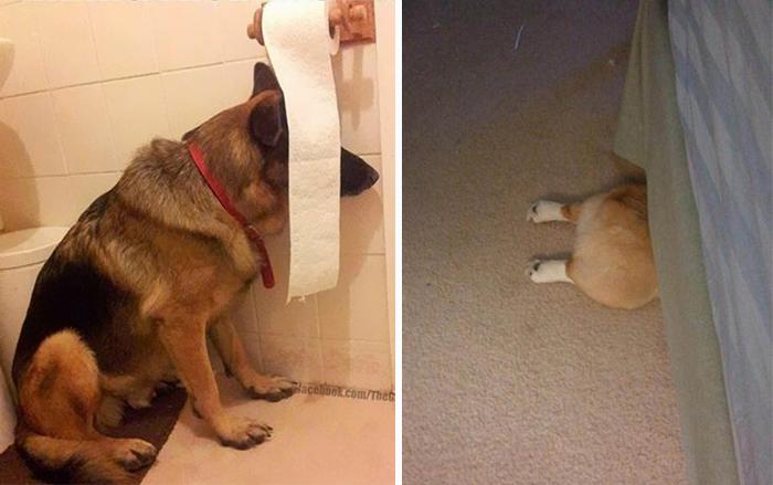 20 Perros que no saben jugar al escondite